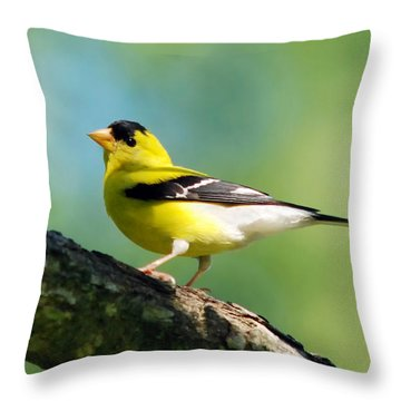 Blue Heart Goldfinch Throw Pillow by Christina Rollo