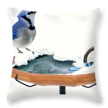 Blue Jay At Heated Birdbath Throw Pillow by Steve and Dave Maslowski