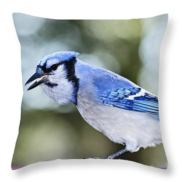 Blue Jay Bird Throw Pillow by Elena Elisseeva