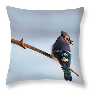 Blue Jay With Nuts Throw Pillow by Everet Regal