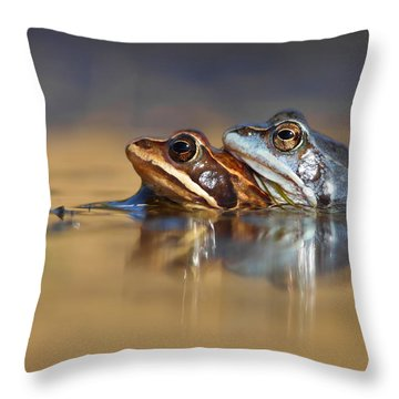 Blue Love ... Mating Moor Frogs  Throw Pillow by Roeselien Raimond