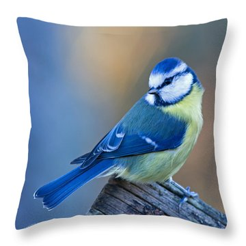 Blue Tit Looking Behind Throw Pillow by Torbjorn Swenelius