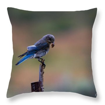 Bluebird Lunch Throw Pillow by Mike  Dawson