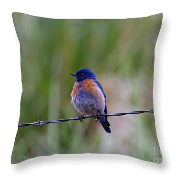 Bluebird On A Wire Throw Pillow by Mike  Dawson