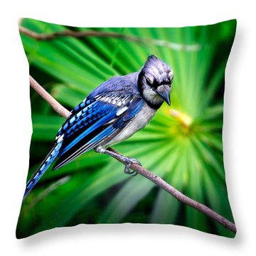 Thoughtful Bluejay Throw Pillow by Mark Andrew Thomas
