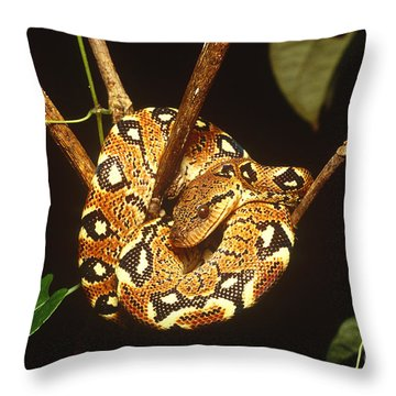 Boa Constrictor Throw Pillow by Art Wolfe
