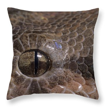 Boa Constrictor Throw Pillow by Chris Mattison FLPA