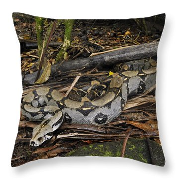 Boa Constrictor Throw Pillow by Francesco Tomasinelli