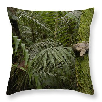 Boa Constrictor In The Rainforest Throw Pillow by Pete Oxford