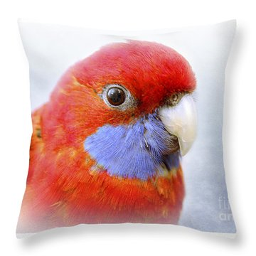 Bobby The Crimson Rosella Throw Pillow by Terri Waters