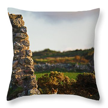 Botallack Fox At Sunset Throw Pillow by Terri Waters
