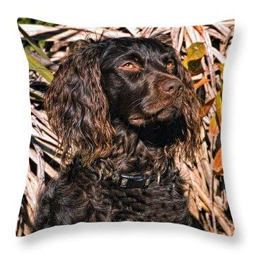 Boykin Spaniel Portrait Throw Pillow by Timothy Flanigan