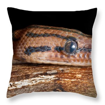 Throw Pillow featuring the photograph Brazilian Rainbow Boa Epicrates Cenchria by David Kenny