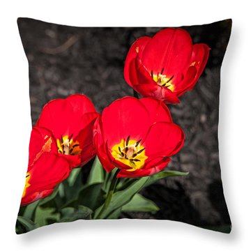Brilliant 1 Throw Pillow by Bob and Nancy Kendrick