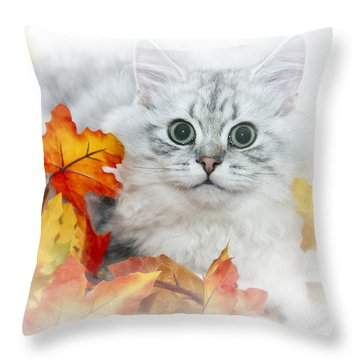 British Longhair Cat Throw Pillow by Melanie Viola