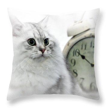 British Longhair Cat Time Goes By II Throw Pillow by Melanie Viola