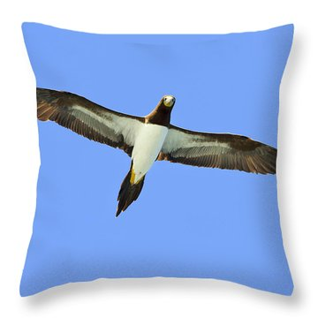 Brown Booby Throw Pillow by Tony Beck