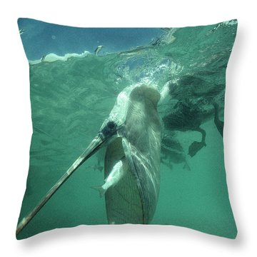 Brown Pelican Catching Mullet Throw Pillow by Tui De Roy