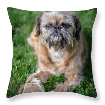 Brussels Griffon Throw Pillow by Edward Fielding