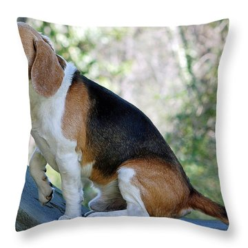 Buddy Throw Pillow by Lisa Phillips