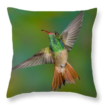 Buff-bellied Hummingbird Throw Pillow by Anthony Mercieca