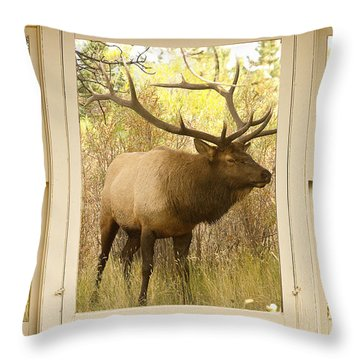 Bull Elk Window View Throw Pillow by James BO  Insogna