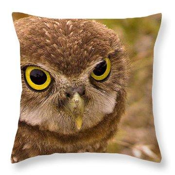 Burrowing Owl Portrait Throw Pillow by Anne Rodkin