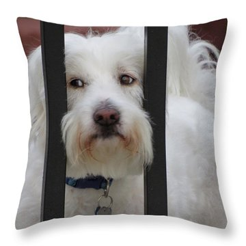 Busted Throw Pillow by Ella Kaye Dickey