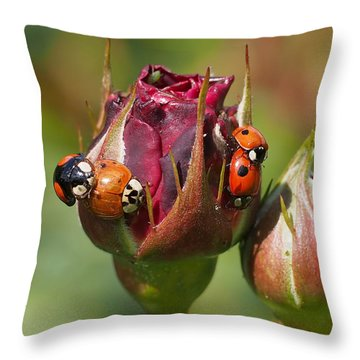 Busy Ladybugs Throw Pillow by Rona Black