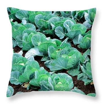 Cabbage, Yamhill Co, Oregon, Usa Throw Pillow by Panoramic Images