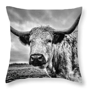 Cadzow White Cow Throw Pillow by John Farnan