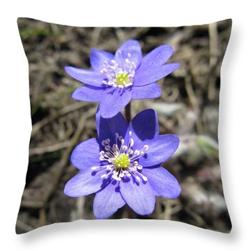 Calling Spring. Two Violets Throw Pillow by Ausra Huntington nee Paulauskaite