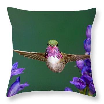 Calliope Hummingbird Stellula Calliope Throw Pillow by Anthony Mercieca