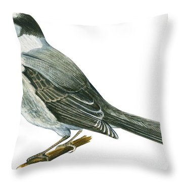 Canada Jay Throw Pillow by Anonymous