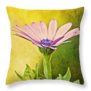 Cape Daisy Throw Pillow by Lois Bryan