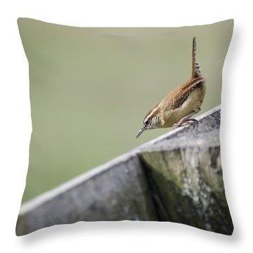 Carolina Wren Two Throw Pillow by Heather Applegate