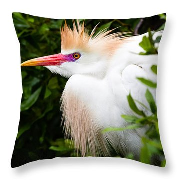 Cattle Egret Throw Pillow by Dawna  Moore Photography