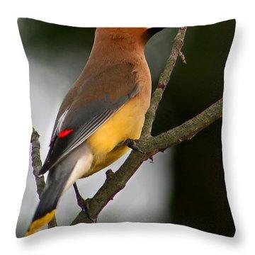Cedar Wax Wing II Throw Pillow by Roger Becker