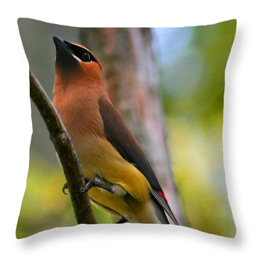 Cedar Wax Wing Throw Pillow by Roger Becker