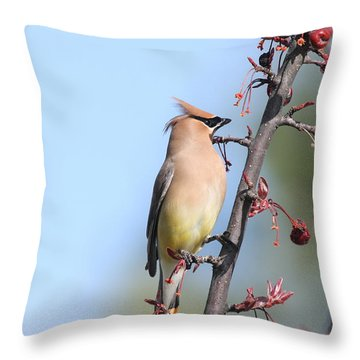 Cedar Waxing Throw Pillow by Donald  Ouellette