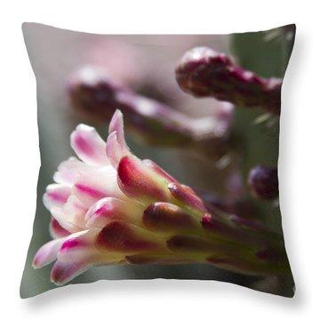 Cereus Hexagonus Pink Throw Pillow by Sharon Mau