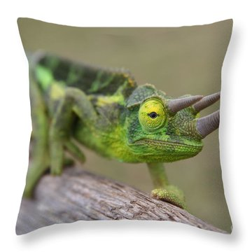 Chamaeleo Jacksonii Ulupalakua Maui Hawaii Throw Pillow by Sharon Mau