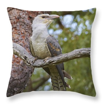 Channel-billed Cuckoo Fledgling Throw Pillow by Martin Willis