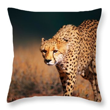 Cheetah Approaching From The Front Throw Pillow by Johan Swanepoel