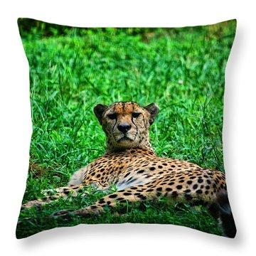 Cheetah Throw Pillow by Karol Livote
