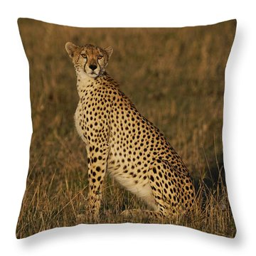 Cheetah On Savanna Masai Mara Kenya Throw Pillow by Hiroya Minakuchi