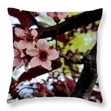 Cherry Blosoms Throw Pillow by Danielle  Parent