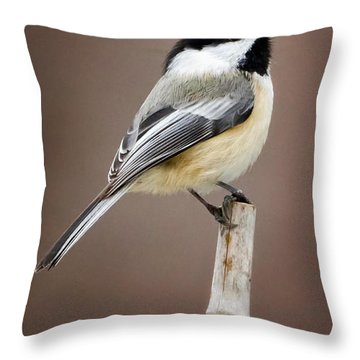 Chickadee Throw Pillow by Bill Wakeley