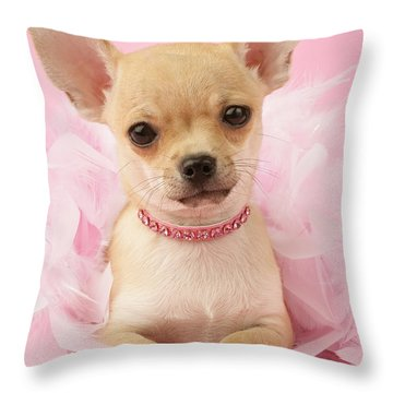 Chihuahua With Feather Boa Throw Pillow by Greg Cuddiford