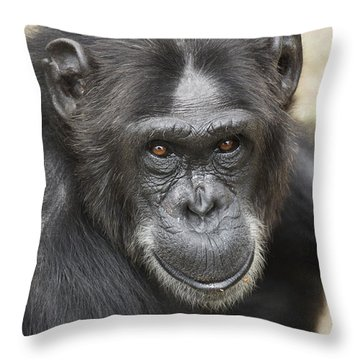 Chimpanzee Portrait Ol Pejeta Throw Pillow by Hiroya Minakuchi